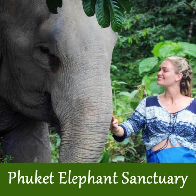 Phuket Elephant Sanctuary Half Day Tour With Transfer