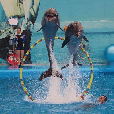 Dolphins Bay Phuket Show Tickets