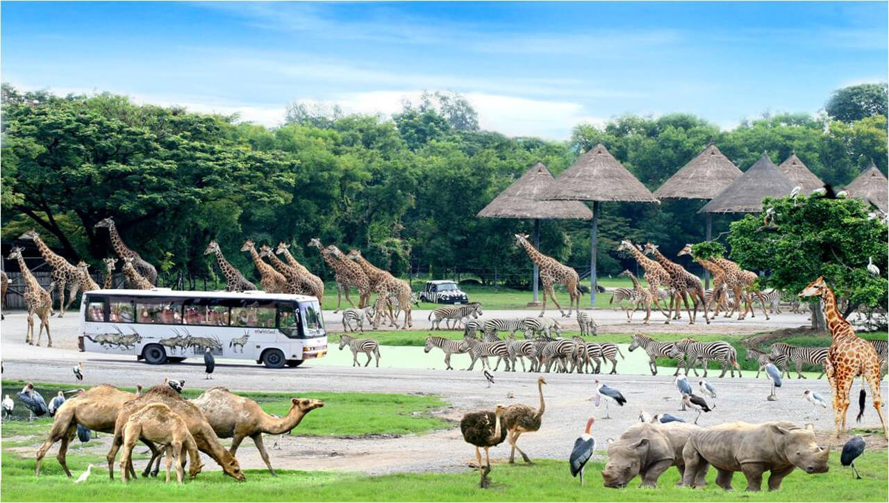 Bangkok Safari World Zoo Tours