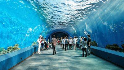 Phuket City Tour Siam Ocean World (Aquarium + 5D Theatre, No Transfer)