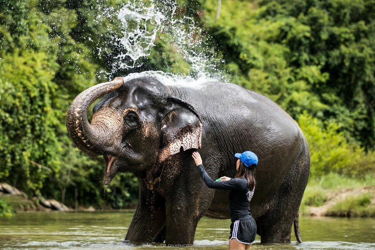 Khao Sok Elephant Bathing