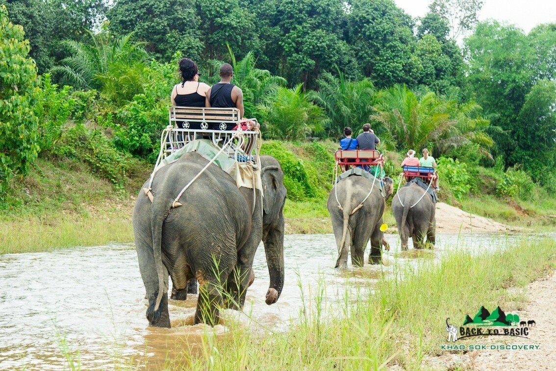 Khao Sok Elephant Trekking