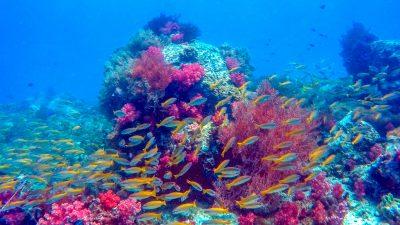 Coral Reef & Fish