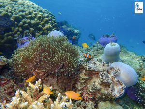 Sea Flower Nemo Nyaung Oo Phee Island Myanmar